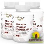 3er Pack Juckbohne - Mucuna Pruriens Extrakt 250mg 3 x 120 Vegi Kapseln
