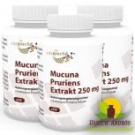 3er Pack Juckbohne - Mucuna Pruriens Extrakt 250mg 3 x 240 Vegi Kapseln