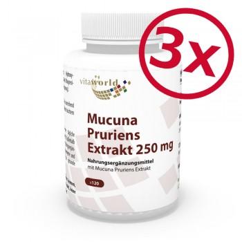 3 Pack Mucuna Pruriens extract Velvet Bean Bengal Bean Florida Bean 250mg 3 x 120 Capsules